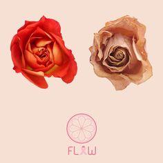 Apoyamos la lucha y prevención contra el cáncer de mama. #flores #flowers #mesrosa #roses #letitflow #FLOW #flor #cancermama #prevencion #breastcancer #support #pink #thinkpink #supportboobies #breastcancerawarenessmonth