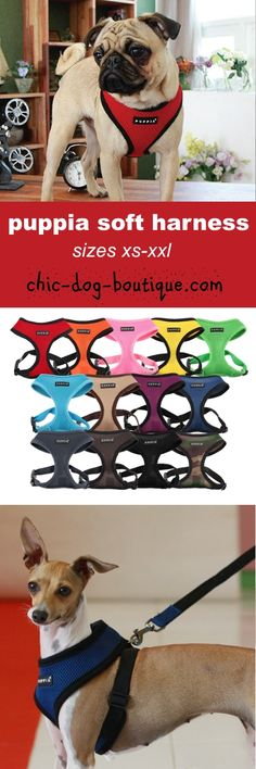Enthusiastic Cute Women Pet Dog Cartoon Short Socks Funky Female Poodle Beagle Bulldog Schnauzer Corgi Pomeranian Puppy Animal Cotton Sock Relieving Rheumatism Women's Socks & Hosiery Underwear & Sleepwears