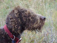 Baxter State Park Service Dogs