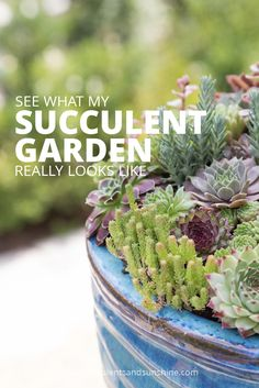 I love how real this post is! She shows that not everything in her succulent garden is picture perfect!