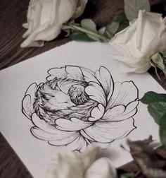 dotwork - tattoo . black bear studio