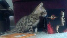 Presley posing like Katniss #Bengal #hungergames