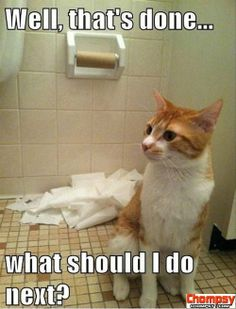 funny cats and toilet paper Funny Picture