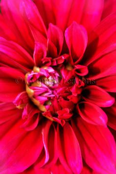 Flower Nature Photography Print by IwonaSCreations