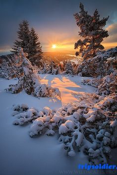I love snow, i love winter, winter time, winter sunset, beautiful landscapes Winter Magic, Winter Snow, Winter Time, Landscape Photography, Nature Photography, Winter Photography, Foto Picture, Winter Scenery, Winter Sunset