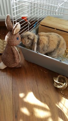 Bunny meets bunny