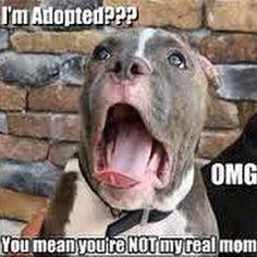 #tbt to the breaking news: #AdoptDontShop !!! #furrypawlife www.furrypawpics.com #instart #petart #art #pitbullsofig #bullies #pitbulls #adopt #funnydog