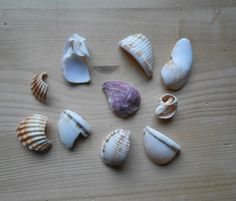 Shell fragments, craft supply, 10 pieces, jewelry supplies, surf tumbled shell fragments C18 di lepropostedimari su Etsy