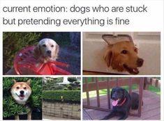 Lustige Tier Memes des Tages – 30 Bilder – Lovely Animals World … - Hunde Lustig Funny Dog Memes, Funny Animal Memes, Cute Funny Animals, Funny Animal Pictures, Funny Cute, Funny Dogs, Pet Memes, Funniest Memes, Funniest Pictures
