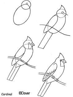 Dover Draw a Horse, Birds, Goat, Peacock, and Comics