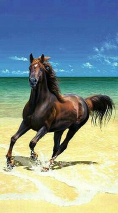 Looks like an Arab? Either way beautiful horse on a beautiful beach. My idea of a perfect vacation destination