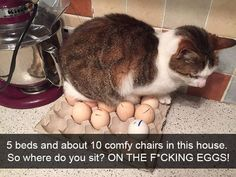 Something a cat would do by Meghanz cats kitten catsonweb cute adorable funny sleepy animals nature kitty cutie ca
