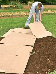Sheet mulch: Lay cardboard.
