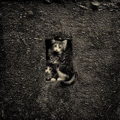 """""""All and all, you're just another kitten in the wall."""""""