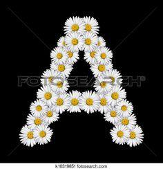 Arquivos de Fotografia - flor, letra k10319851 - Busca de Fotos, Imagens…