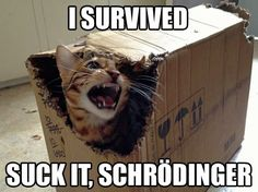 I'm pretty sure I knew about Schrödinger's cat before The Big Bang Theory...or did I?