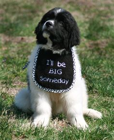 Personalized Name or Short Saying Puppy Bib