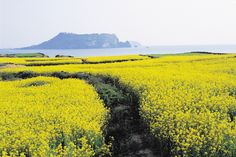 cheju island south korea | Jeju Island - The island is full of beauty