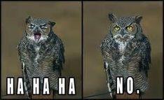 15 Hilarious Owl Memes