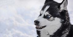 7 Ways To Clean Your Dog's Teeth That They Won't Hate
