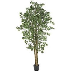 @Overstock.com.com.com - Japanese Maple 6-foot Silk Tree