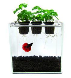 """Hydrofloria- very cool """"new age"""" aquarium!"""