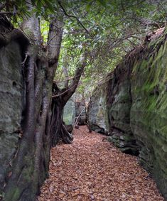 Did you know that there's a rock maze hiding deep in Maryland's woods? Check out this unique spot that take you on a hiking adventure like no other. Oh The Places You'll Go, Places To Travel, Places To Visit, Camping Places, Travel Destinations, Maryland Day Trips, Maryland Parks, Hiking Spots, State Forest