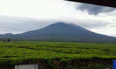 Mount Kerinci from Kayu Aro, Kerinci