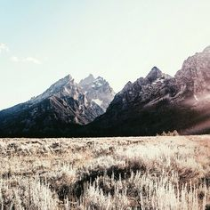 "thatkindofwoman: "" Golden Fields of the Tetons 