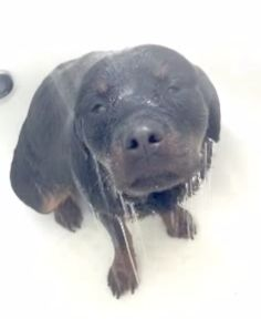 ADORABLE DOG VIDEO WHO LOVES TO TAKE HERSELF TO SHOWER!