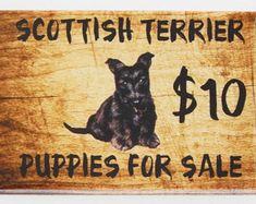 Puppies for sale   Etsy Shih Tzu Breeders, Scottish Terrier, Puppies For Sale, Etsy, Scottish Terriers, Scottie Dog
