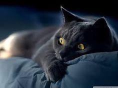 Image result for foto grafer cat