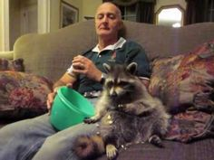 A Man + his rescued RACCOON: When The Rescued Raccoon Died, This Is How They Paid Their Last Tribute. So Touching!