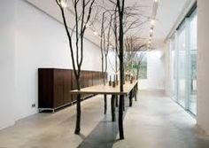 indoor trees minimalism - Buscar con Google