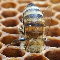 Μυρμήγκι διευθυντής γνωριμιών