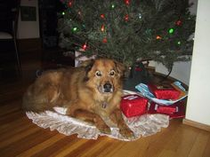 Parents Name: Erica Pets Name: Bear Pet Species: Dog Pets Favorite thing to do: Chasing squirrels Eulogy: Bear was 1.5 years old when my family rescued him before he was to be euthanized at a shelt...