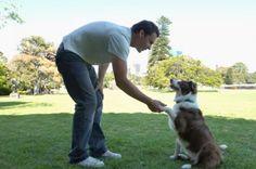 Amicizia e fiducia tra uomo e cane  Pets and Clicker training