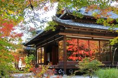 Autumn Color Report 2013: Kyoto Report