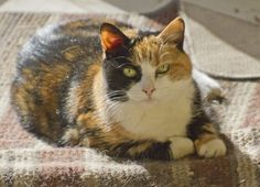 Feline Fun: Keeping Your Indoor Cat Active