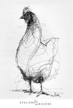 Bird Drawings, Pencil Art Drawings, Animal Drawings, Art Sketches, Drawing Faces, Chicken Drawing, Chicken Art, Gravure Illustration, Watercolor Illustration