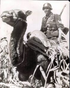 German Soldier Rides a Camel on the Russian Front