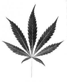 Reduction in marijuana penalties approved by St. Louis Board of Aldermen : News