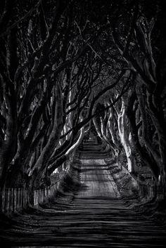 Dark hedges, Antrim coast