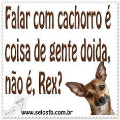 EU FALO MTOOO!!! <3 #cachorro #gato #filhode4patas #petmeupet