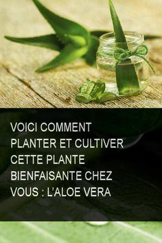 Voici comment Planter et cultiver cette plante bienfaisante chez vous : L'Aloe Vera Nutrition Articles, Nutrition Guide, Fitness Nutrition, Health And Nutrition, Health And Wellness, Nutrition Products, Health Diet, Champion Nutrition, Gardens