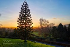 Monkey Puzzle by srprice13. Please Like http://fb.me/go4photos and Follow @go4fotos Thank You. :-)