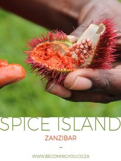 One of the things on my Zanzibar bucket list had been to take a Spice Tour and as these are located near to Stone Town and on our route back to the airport we planned to do our tour on our last morning to save the costs of time and money traveling back and forth across the island from our hotel. Unfortunately this meant we were to do our tour in the rain…