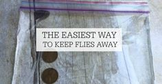 Tired of flies bugging you? Try this simple tip to keep flies away. It costs less than $.10 and is easy to make. It is the easiest way to keep flies away.