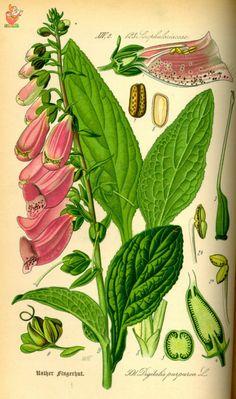 (176)  - Немного ботаники -