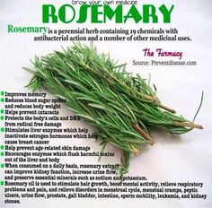 Health Benefits of Rosemary - It is a perennial herb containing 19 chemicals with antibacterial action.  Improves memory, Reduces blood sugar spikes and reduces body weight, help prevent age-related skin damage, Stimulates liver enzymes which help inactivate estrogen hormones which help cause breast cancer.  Rosemary oil is used to stimulate hair growth, boost mental activity,relieve respiratory problems and pain